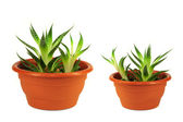 Two green flower pots — Stock Photo