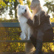 Samoyed girl - Stock Photo