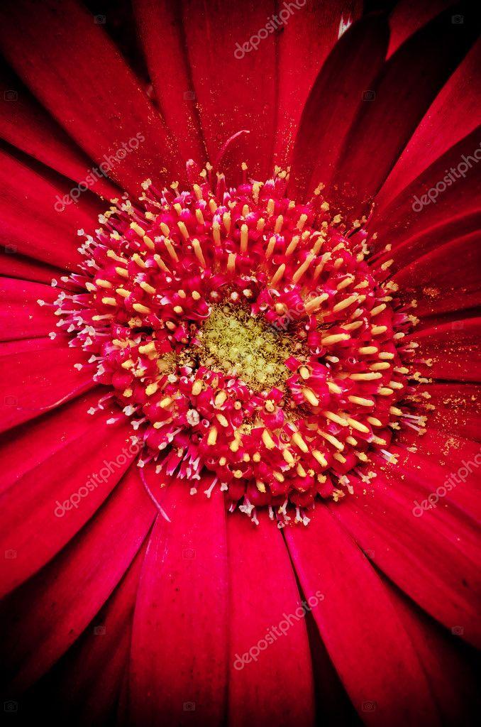 Близнецы цветок