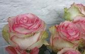 Flowers decorative — Stock Photo