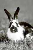 Rabbit — Photo