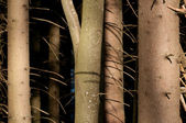 Puesta de sol en el bosque — Foto de Stock