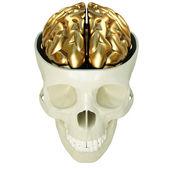 Golden brains — Stock Photo
