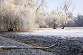 Winter Park — Stock Photo