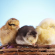 Easter Animals! — Stock Photo