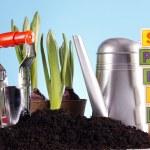 Gardening concept — Stock Photo #5058278