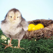 Easter Animals! — Stock Photo #5058558