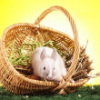 Easter Animals! — Stock Photo #5059425