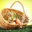 Easter Animals! — Stock Photo #5059474