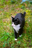 Walking black cat — Stock Photo