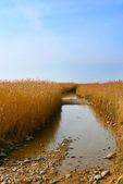 Strada allagata per l'isola di vilsandi, estonia — Foto Stock