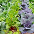 Winter Vegetable Garden — Stock Photo