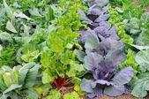 Winter Vegetable Garden — Stock Photo