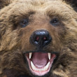 Stock Photo: Bear closeup
