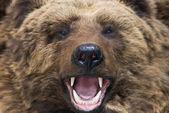 クマのクローズ アップ — ストック写真