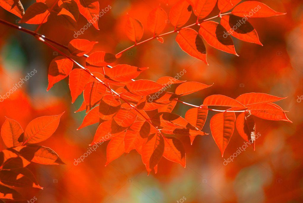 秋天的树叶 — 图库照片