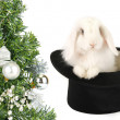 Rabbit symbol of 2011 — Stock Photo