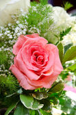 Rose flower — Stock Photo