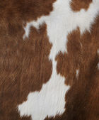 Cow texture — Stock Photo