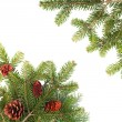 Christmas tree branches on white — Stock Photo