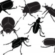 Chafers illustration collection - Stock Vector