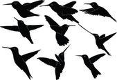 Humming bird collection — Stock Vector