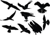 Falcons collection silhouette — Stock Vector