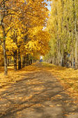 City street in autumn — Stockfoto