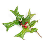 Sprig of holly many ripe red berries isolated against white — Стоковое фото