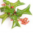 Christmas green framework with holly berry isolated - Stock Photo