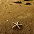 Starfish with frame on the beach, vacation memories — Stock Photo