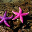 Starfish - Foto de Stock