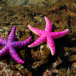 Starfish - Foto Stock