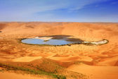 Dry plant in desert lake — Stock Photo