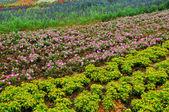 Pole květin — Stock fotografie