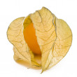 One physalis fruit — Stock Photo