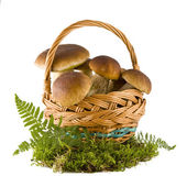 Boletus mushrooms in a basket — Stock Photo