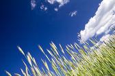 Crop, blue sky — Stock Photo