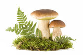 Two mushrooms — Stock Photo