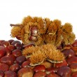 Stock Photo: Chestnuts inside husk
