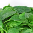 Bunch of spinach — Stock Photo #4272598