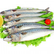 Mackerels — Stock Photo