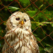 An Owl looking through the wire mesh — Stock Photo