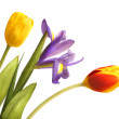 Bouquet of tulip and iris - Stockfoto