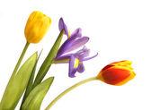 Bouquet of tulip and iris — Stock Photo