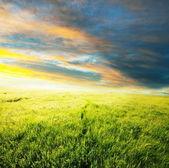 Meadow on sunset — Stock Photo