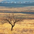 Alone tree - Stock Photo
