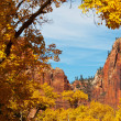 Autumn in Zion - Stock Photo