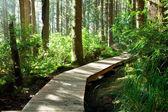 Dřevěný — Stock fotografie
