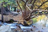 Autumn creek — Stock Photo